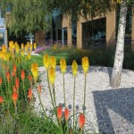 Commercial Business Park grounds maintenance Ruislip, Middx