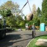 Mature tree planting Rickmansworth