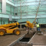Semi mature tree planting Hertfordshire