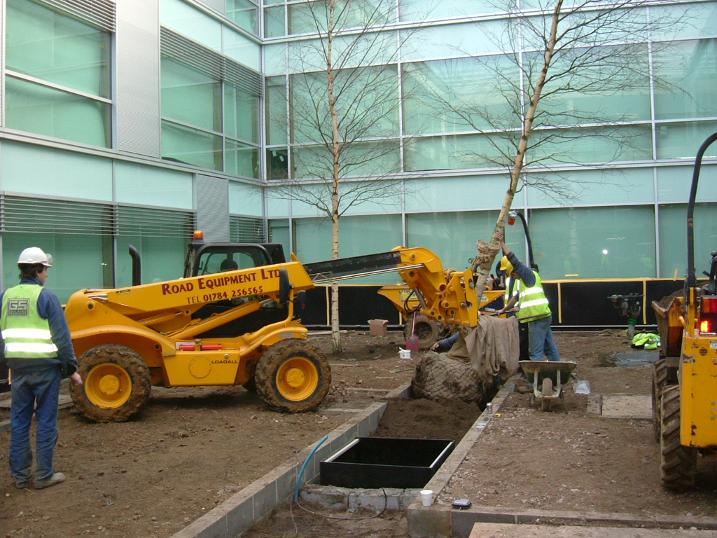 Semi mature tree planting Hertfordshire