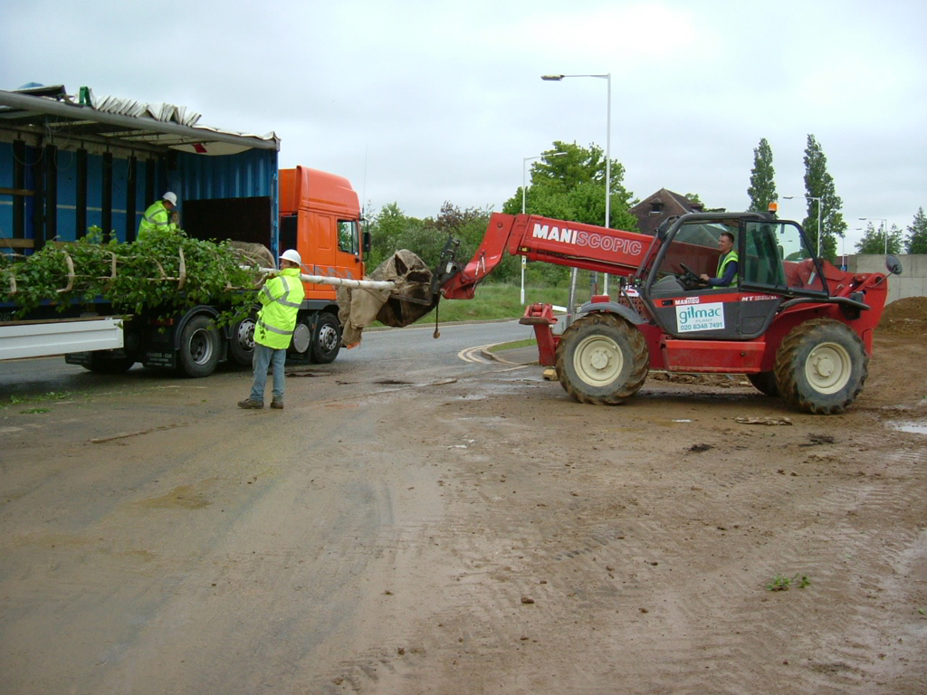 Mature tree planting Buckinghamshire