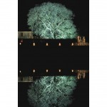 Dramatically uplit tree reflected in a pond