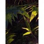 Uplit tree and bamboo foliage
