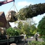 Tree planting Amersham, Bucks