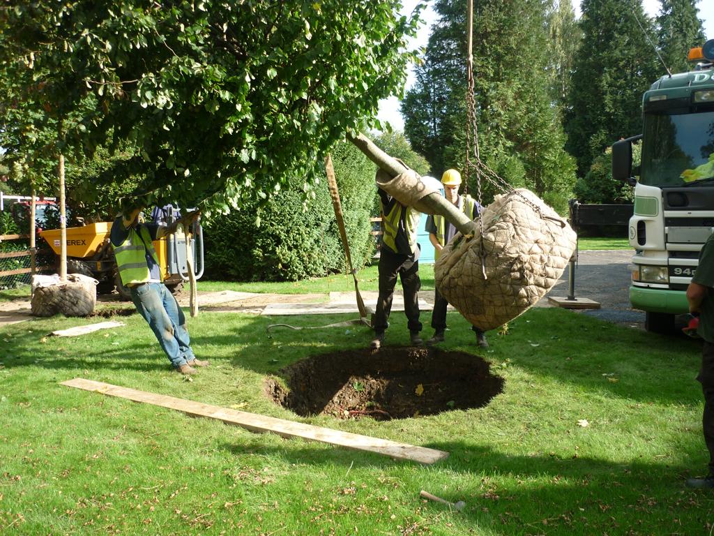 Tree planting Amersham, Buckinghamshire