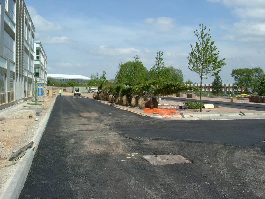 Tree Planting WGC