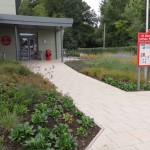 Planting design, St Albert's School, Hemel Hempstead, Herts