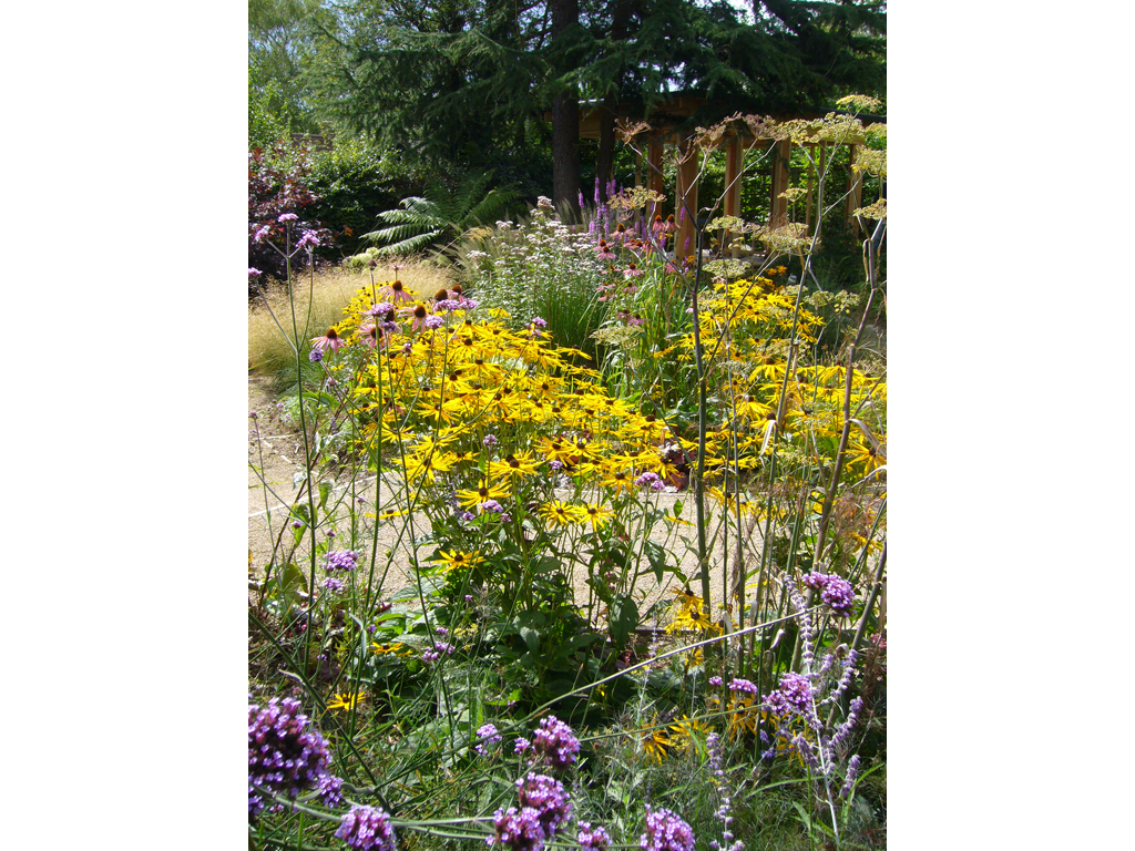 Wildlife garden design near St Albans, Hertfordshire