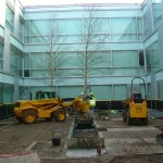 Tree Planting at landscape design & build WGC, Herts