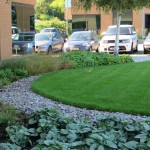 Commercial Office Suite soft landscape design & build, Middx