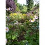 Wildlife Garden, Kings Langley
