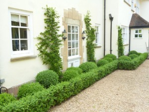 Formal planting private residence between Tring and Hemel Hempstead, Herts