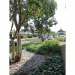 Commercial landscape design & build