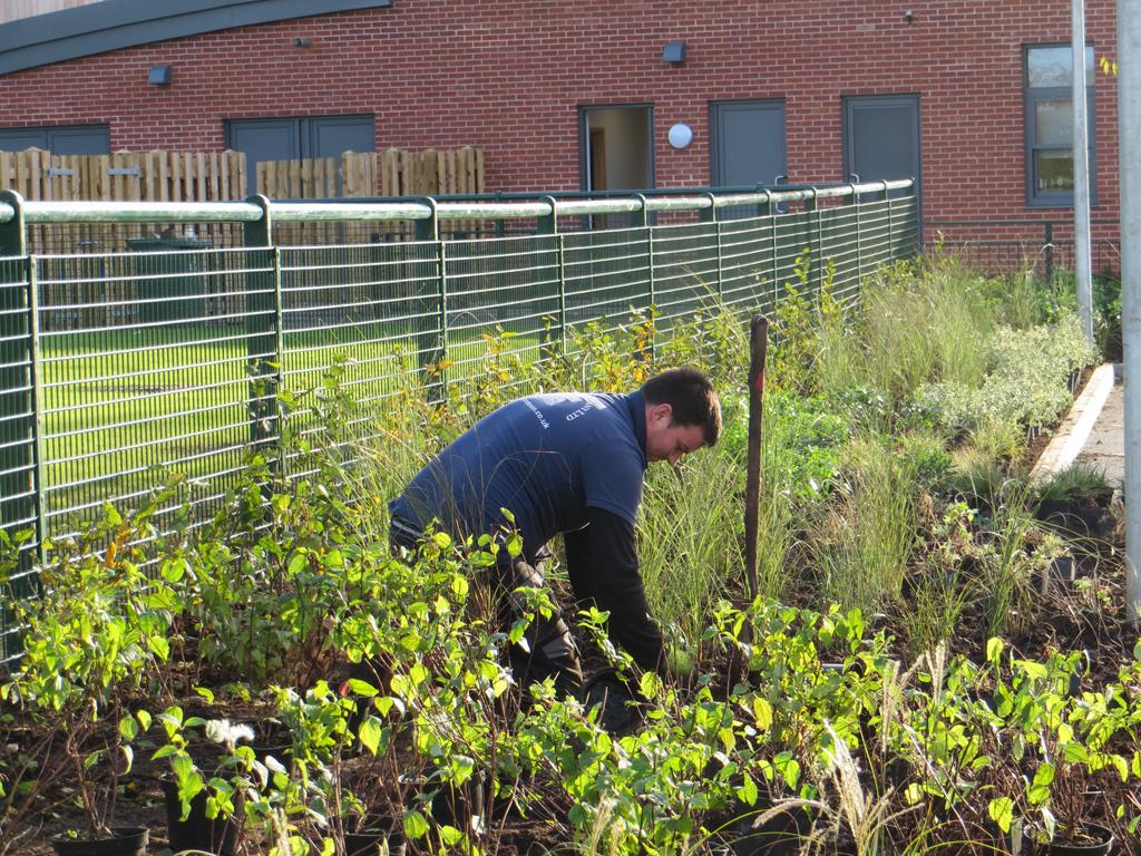 Soft Landscaping, St Albert's School, Hemel Hempstead, Hertfordshire