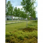 Commercial soft landscape construction