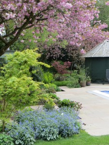 Woodland edge planting, image taken today at one our gardens in Berkhamsted.