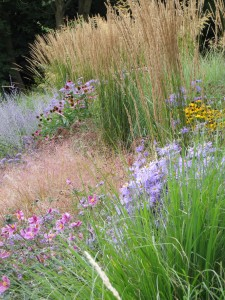 Later perennials and grasses on one our projects in the Chilterns. This image was taken mid September