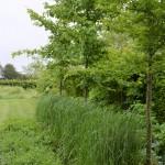 04.917 Garden Barn A13