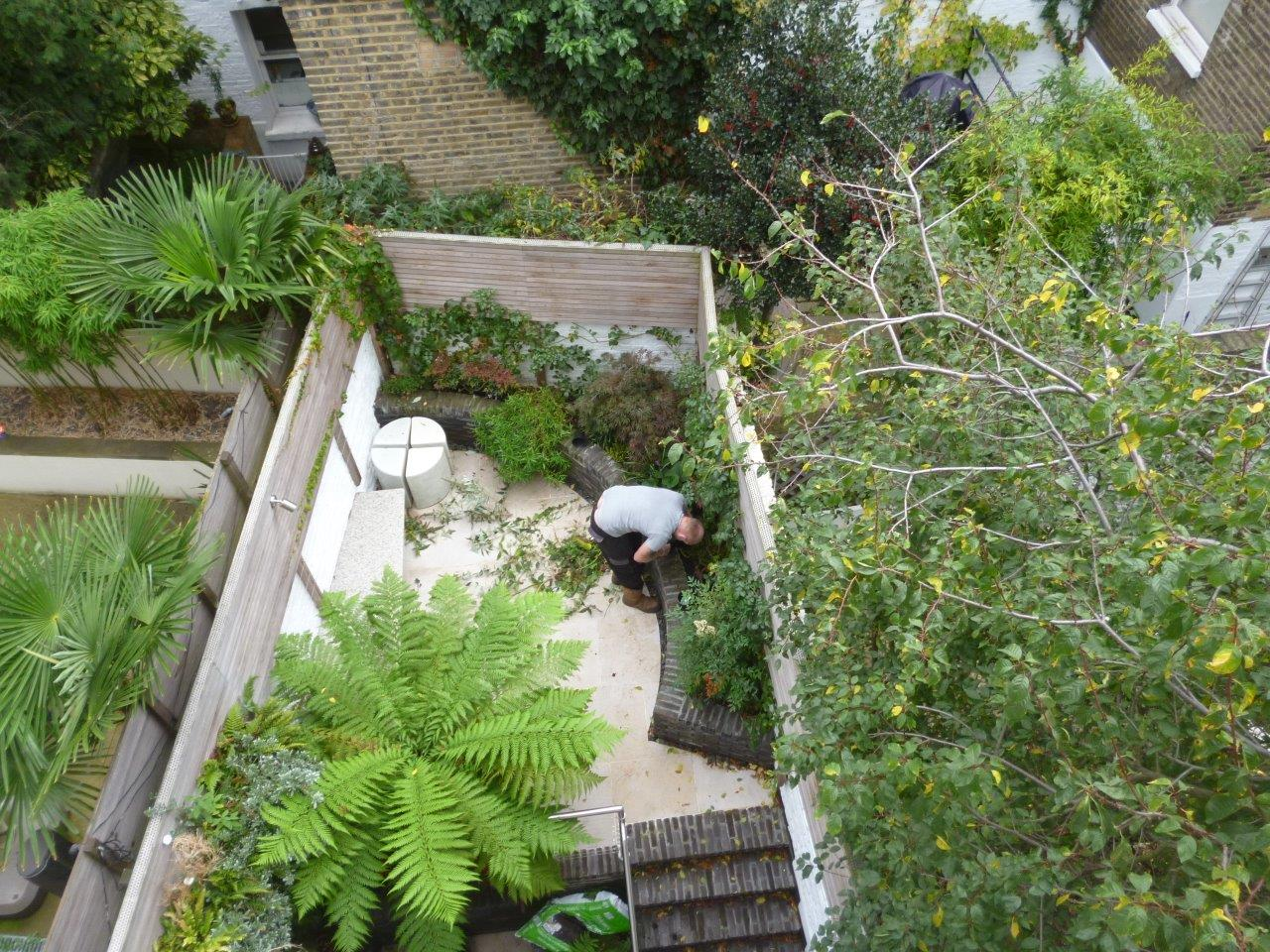 One of The Garden Company professional gardeners at work in a contemporary London garden