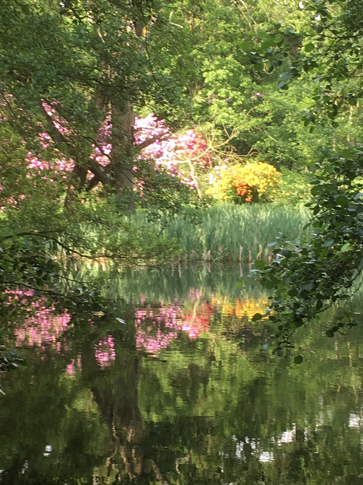 Light reflected in a pond
