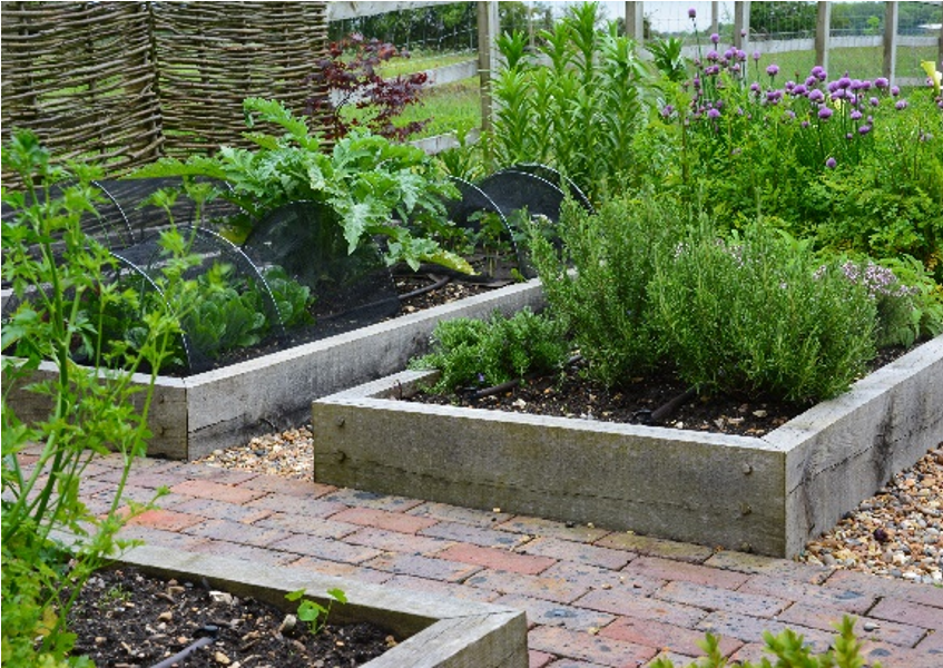 Raised beds constructed from green oak