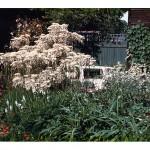 1997 winner soft landscape construction, low allergen garden, Capel Manor College