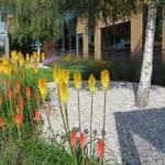 Commercial Business Park grounds maintenance Ruislip, Middx