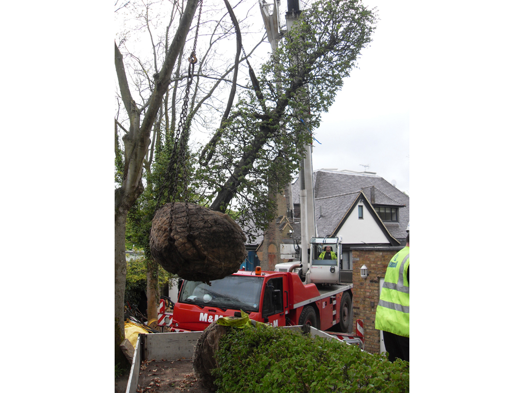 Tree Planting Buckinghamshire
