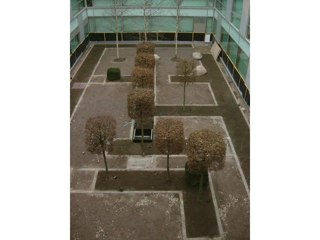 Semi mature tree planting Herts