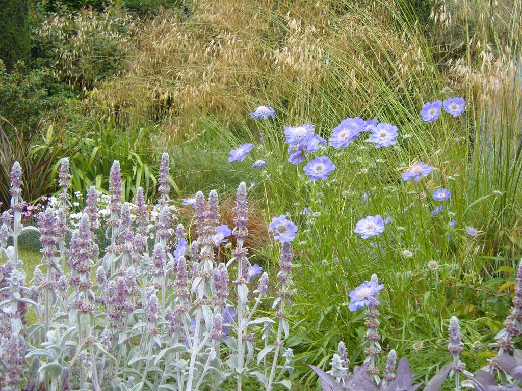 Landscape gardeners and garden maintenance services in Watford, Herts