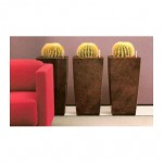 Cacti in cube planters