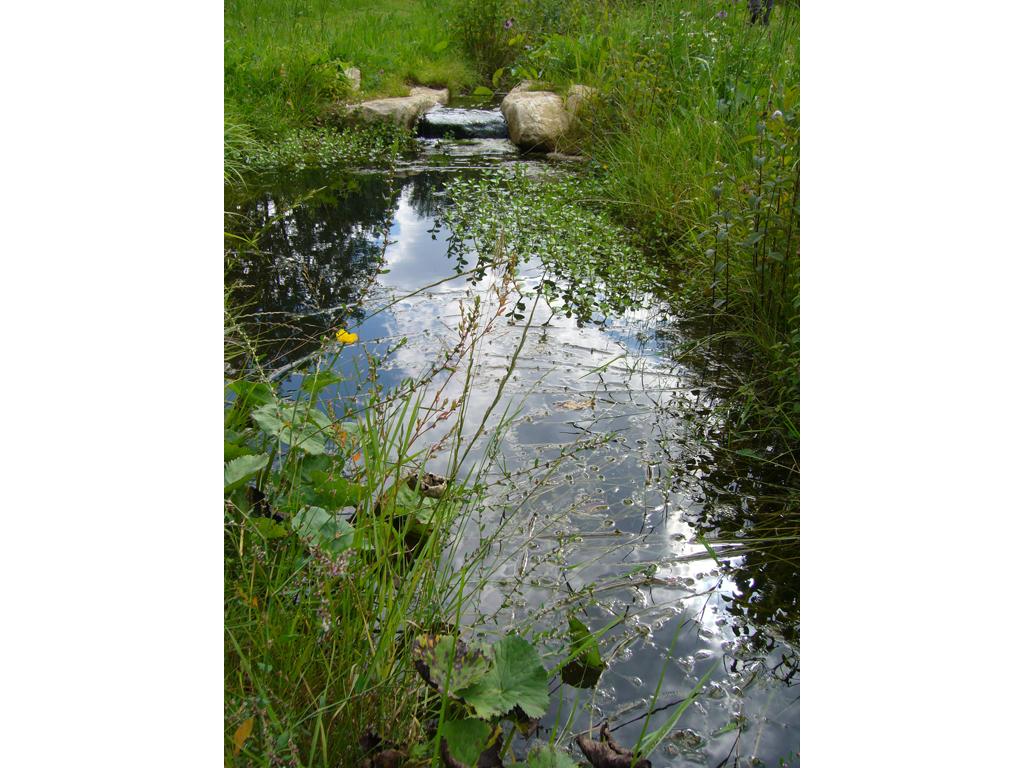 Natural stream construction, Ashridge Estate, National Trust, Herts