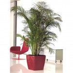 Palm in red planter