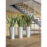 Sansevieria in silver cylinders