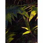 Uplit tree and bamboo foliage