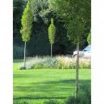 Tree planting near St Albans, Hertfordshire