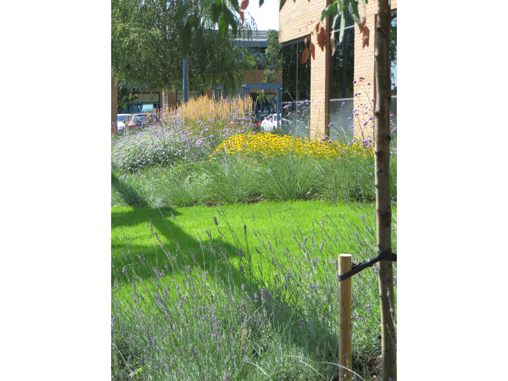 Commercial Offices landscape design and construction