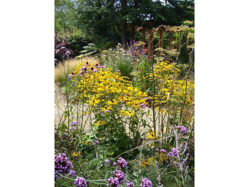 Wildlife garden design near St Albans, Hertfordshire