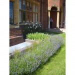 Hotel grounds landscaping solutions by James Scott