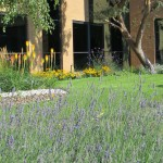 Soft landscaped commercial offices designed by James Scott