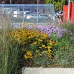 Soft landscaping, St Albert's School, Hemel Hempstead, Herts