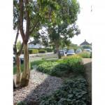 Commercial landscape design & build