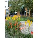 Commercial Business Park Soft Landscape design & build