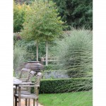 Garden design near Chesham Bucks