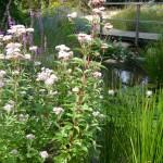 Garden design Hemel Hempstead
