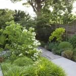 05.906 Garden Laurel A12 CR