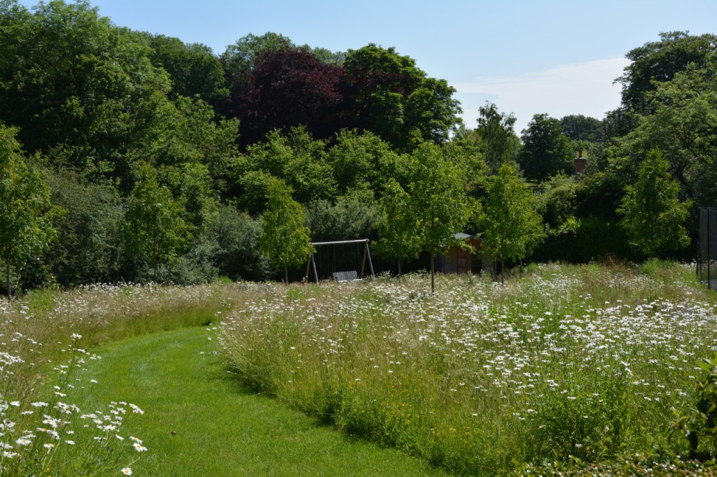 6. Construct a wildflower meadow